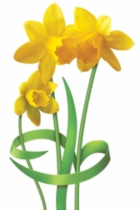 Support Daffodil Day