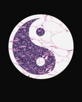 """""""Balance"""" Digital Pathology Print by Robert S. Kelley"""