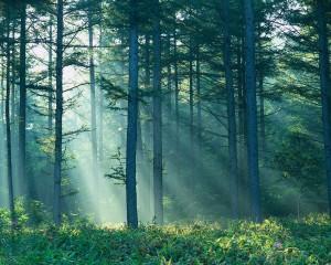 forestlight1.jpg