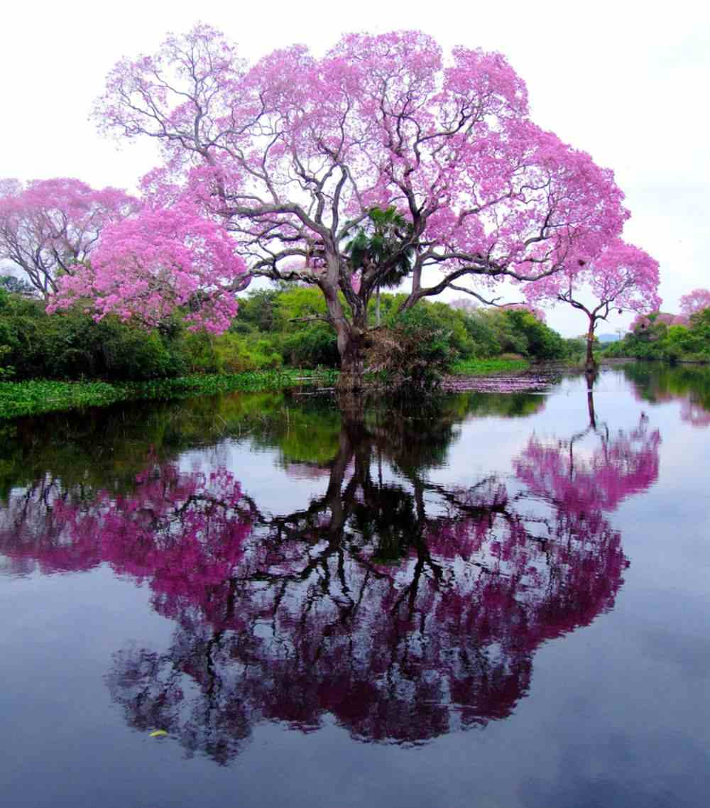 photos of tree