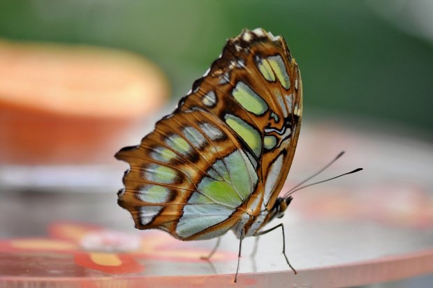 butterfly-4716054_1920.jpg