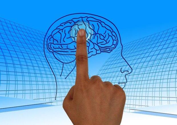 brain-770044_640.jpg
